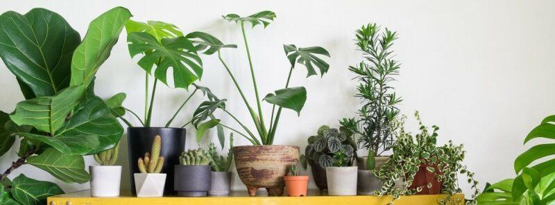 kamerplanten kopen en online bestellen vanaf de kwekerij